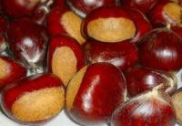 Ecker 1 Früchte